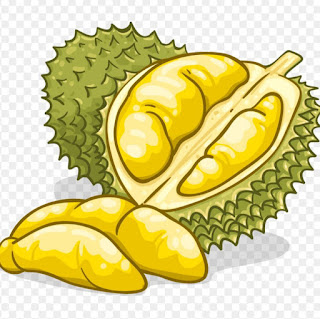 Durian sketch