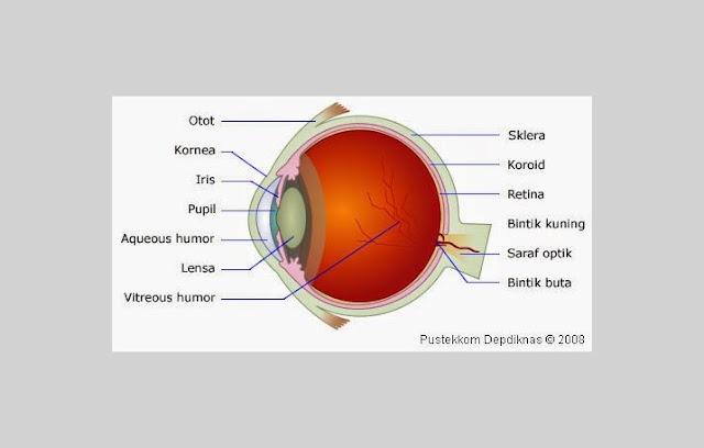 Mata Sebagai Indera Penglihatan