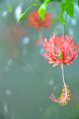 Red flower in vintage picture shot