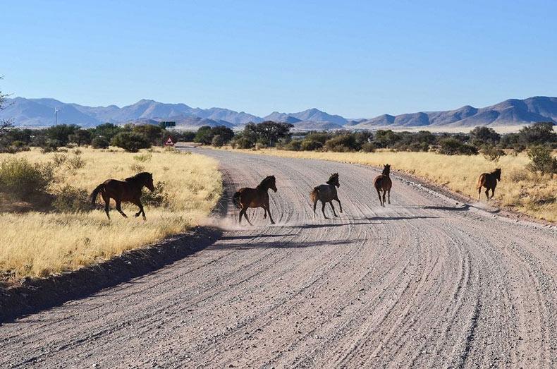 Los caballos salvajes del desierto del Namib | Namibia