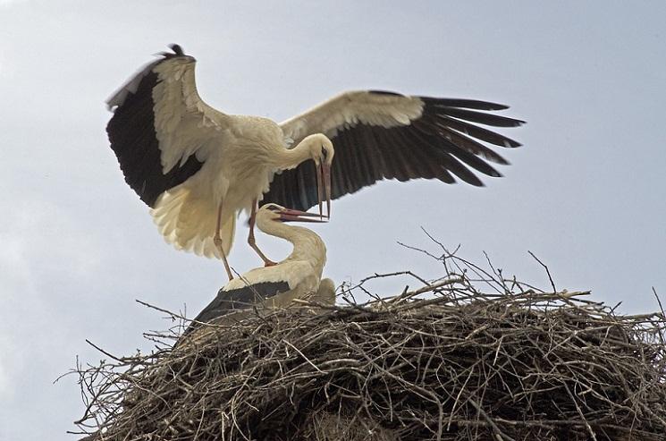 Cara Menakjubkan Induk Burung Memberi Makan Anak-anaknya