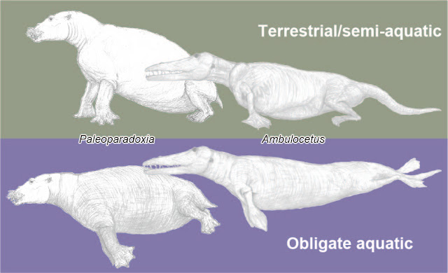 New index reveals likelihood of terrestrial or aquatic lifestyles of extinct mammals