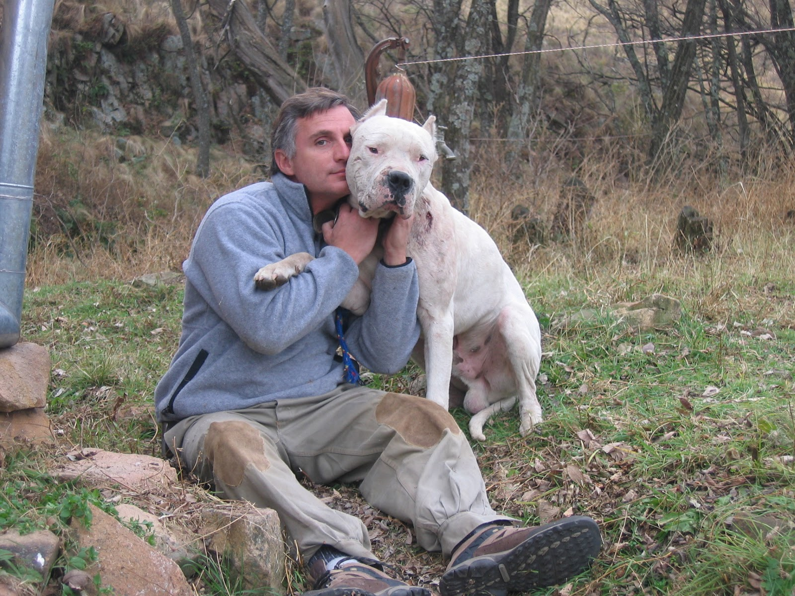 Gallo Reina completar  DOGO4U - ABOUT DOGO ARGENTINO: FAMOUS DOGOS