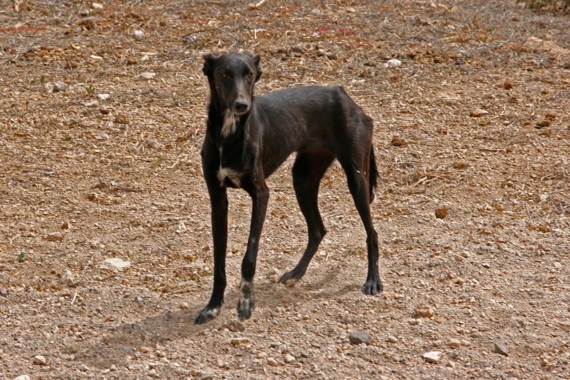 Tierseelen-Teneriffa/Straßenhundefinca \