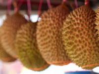 Nikmati Durian Sepuasnya di Desa Ini Dengan Hanya Bayar Rp 50 Ribu