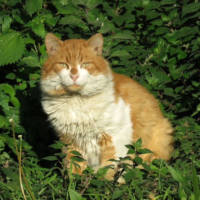 A beautiful cat sitting in the green, Spianata del Molo Mediceo, Livorno