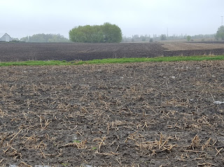 wet-unplanted-field