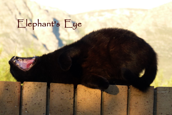 May 2013 with Elephant's Eye mountain