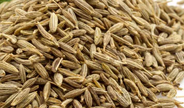 Benefits of Jeera Water (Cumin Seeds) for the skin