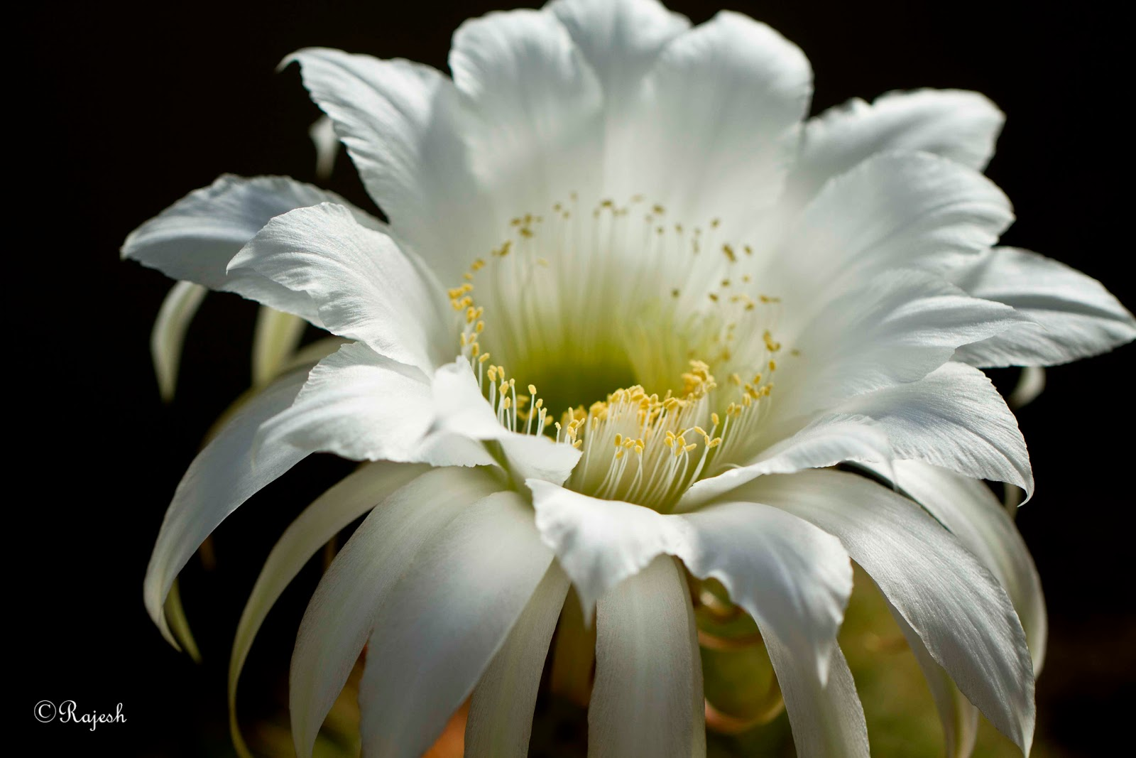 List of white flowers new house designs my pics white flower name unknown mightylinksfo