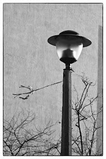 Utcai lámpa fekete-fehérben Szegeden
