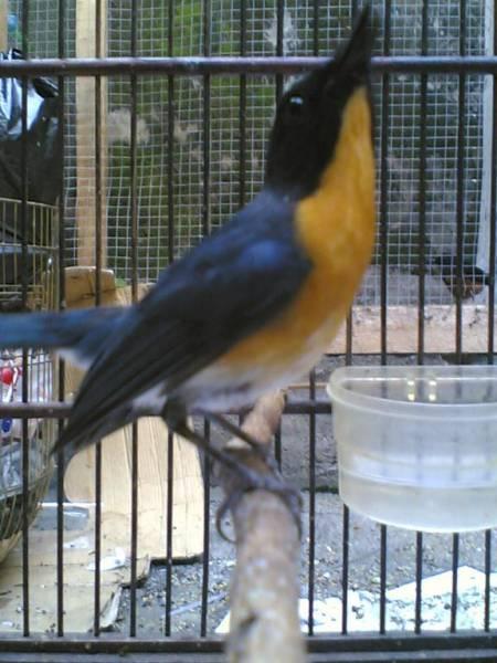 Galery Burung gambar macam macam burung