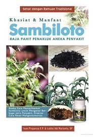 Jual Bibit Sambiloto di Semarang