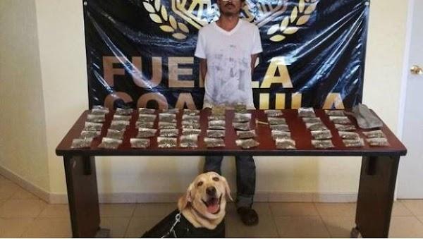 Perrito policial sonríe orgulloso tras detención