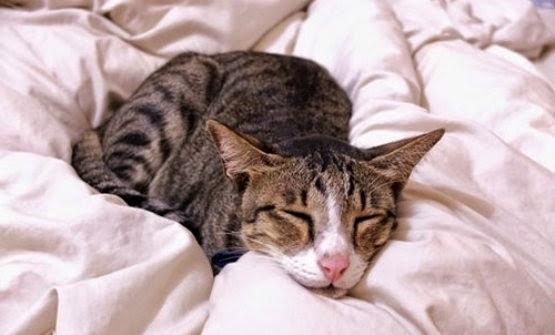http://3.bp.blogspot.com/-KK4wEZfstDQ/VOcxCLx4qFI/AAAAAAAAAt8/EFv32zcrlt8/s1600/penyebab-utama-diare-pada-kucing.jpg