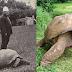 Самые старые живые организмы планеты: Bonus