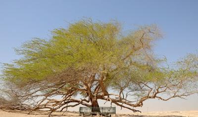Pohon Kehidupan, Bahrain