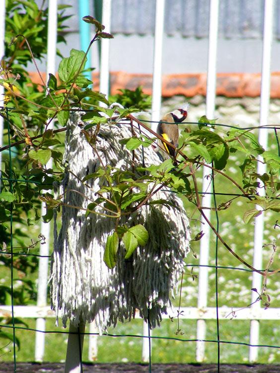 days on the claise petit petit l 39 oiseau fait son nid. Black Bedroom Furniture Sets. Home Design Ideas