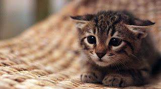 πρόστιμο 60.000 ευρώ γυναίκα που πέταξε γατάκια σε κάδο!