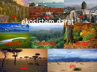 Www Rangkuman Pendidikan Blogspot Com Contoh Ekosistem Darat