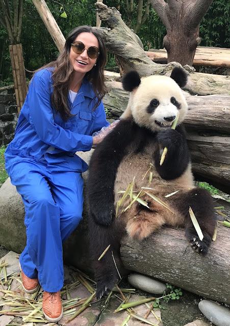 Onde ver um panda