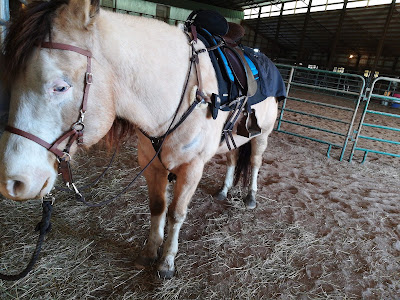 PSSM friendly tack, muscle disorder horse tack, bitless tack reviews