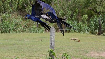 Edição deste domingo (17/4) traz a segunda e última reportagem do Pantanal do Mato Grosso do Sul. Programa da TV Cultura vai ao ar às 17h30 - Divulgação