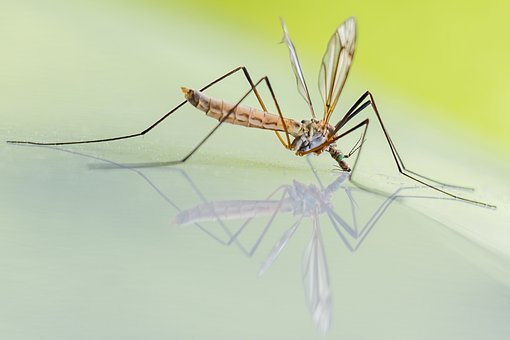 Methods-For- Trapping- Mosquitoes