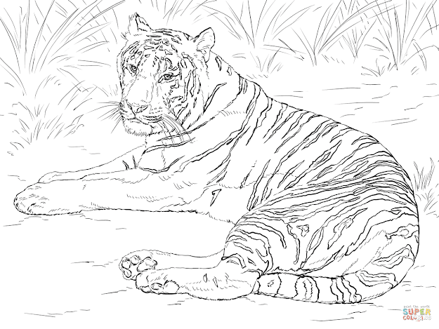 Siberian Tiger Laying Down