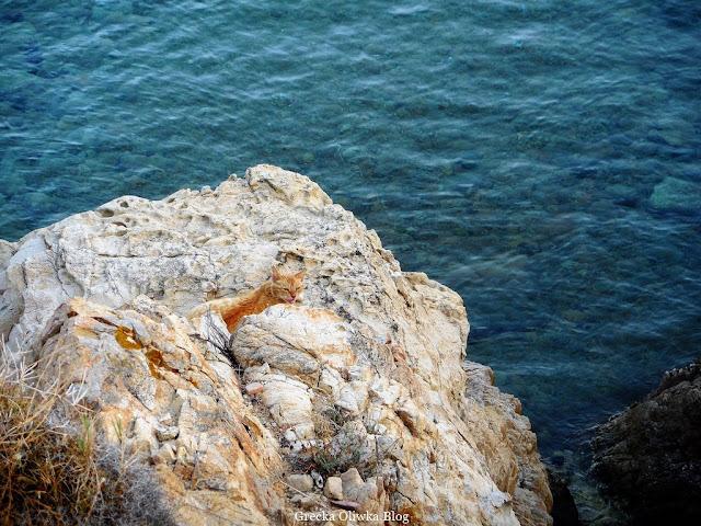 Grecki rudy kot, kot na skale w Grecji, kot nad greckim morzem, błękitne morze