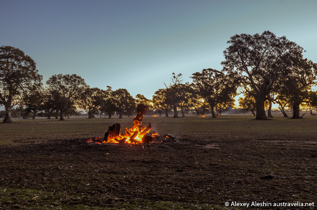 Burning uprooted stumps near the Grampians National Park