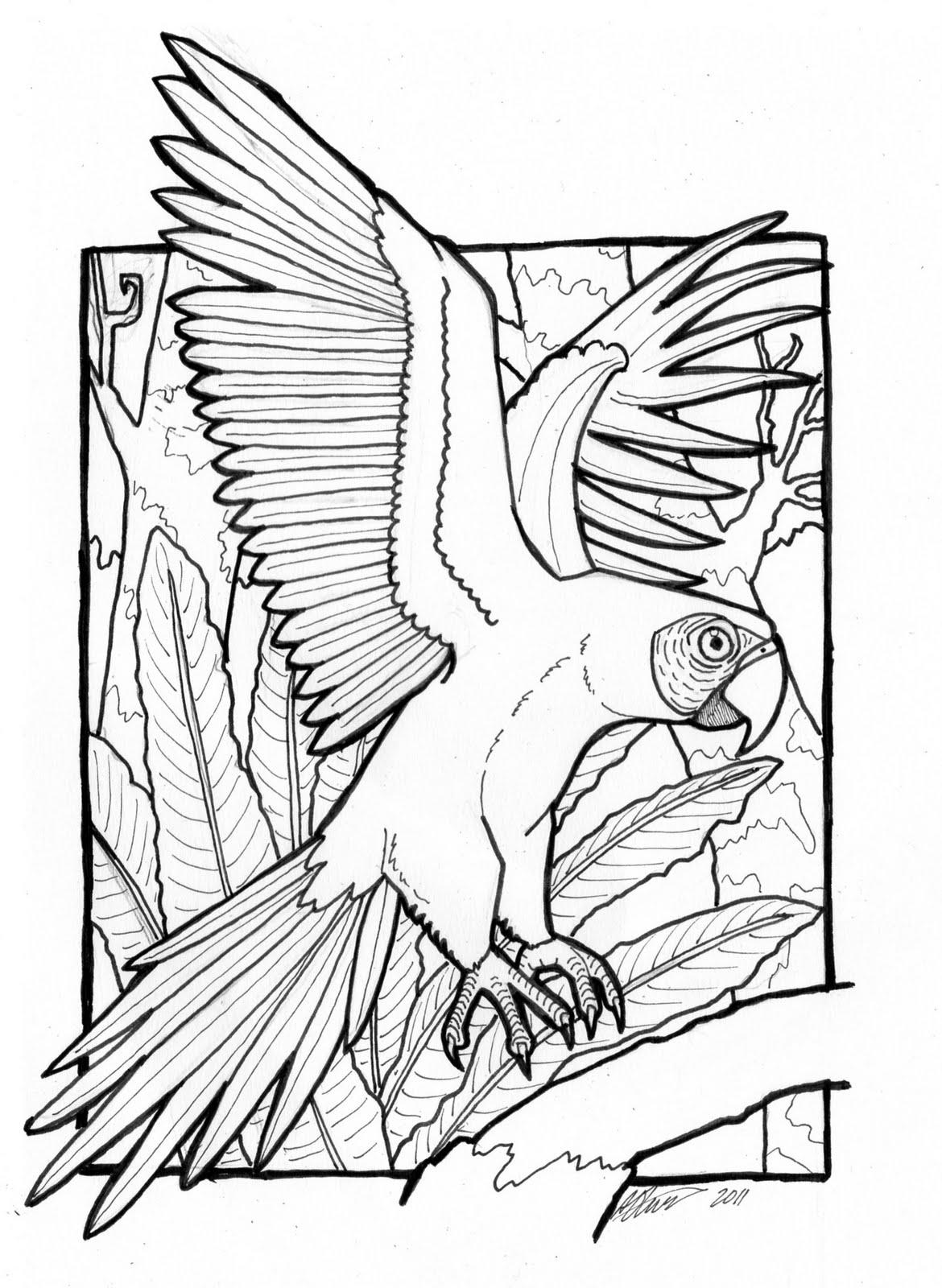 blue macaw coloring pages blue macaw coloring page free printable