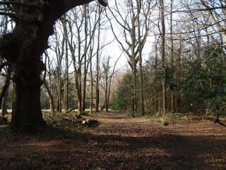 Another view of the ancient woodland and clearing beyond