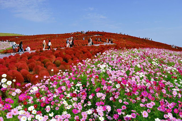 Công viên Hitachi Nhật Bản
