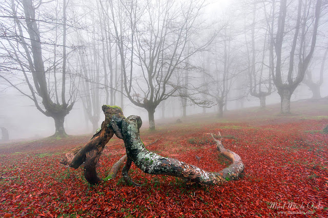 Bosque de Belaustegi