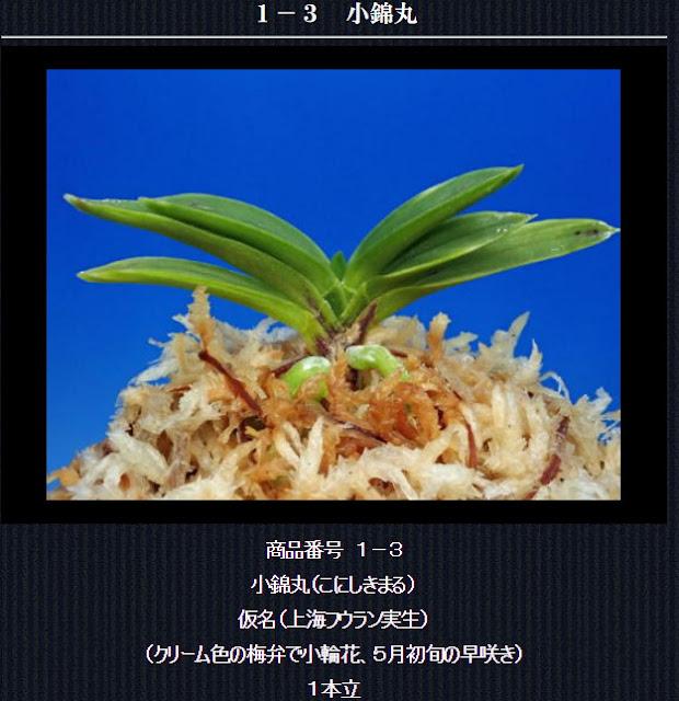 http://www.fuuran.jp/1-3.html