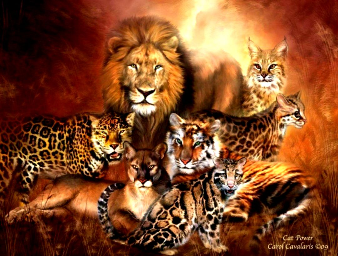 Wild Cats Wallpapers Hd Its Wallpapers