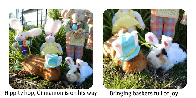 #Easter, #Guineapigs CarmaPoodale.com