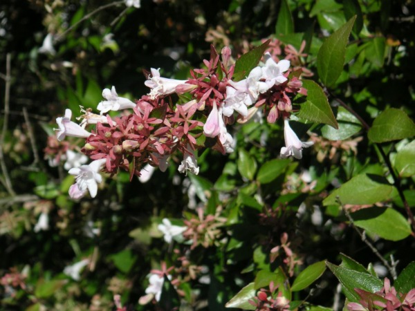 Plantas trepadoras para muros soleados guia de jardin - Plantas perennes exterior ...