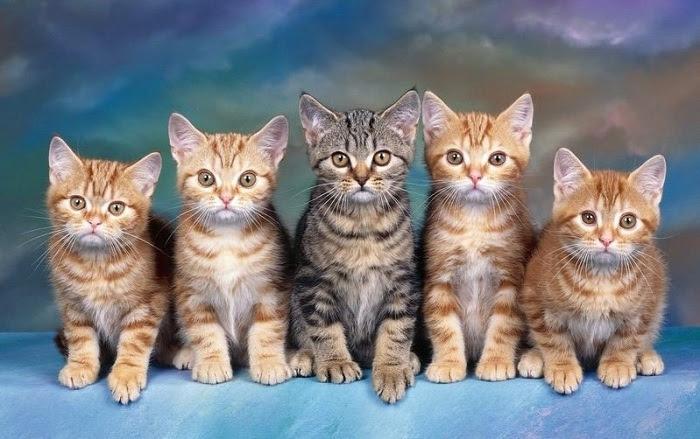 Chơi với mèo bị viêm da dị ứng