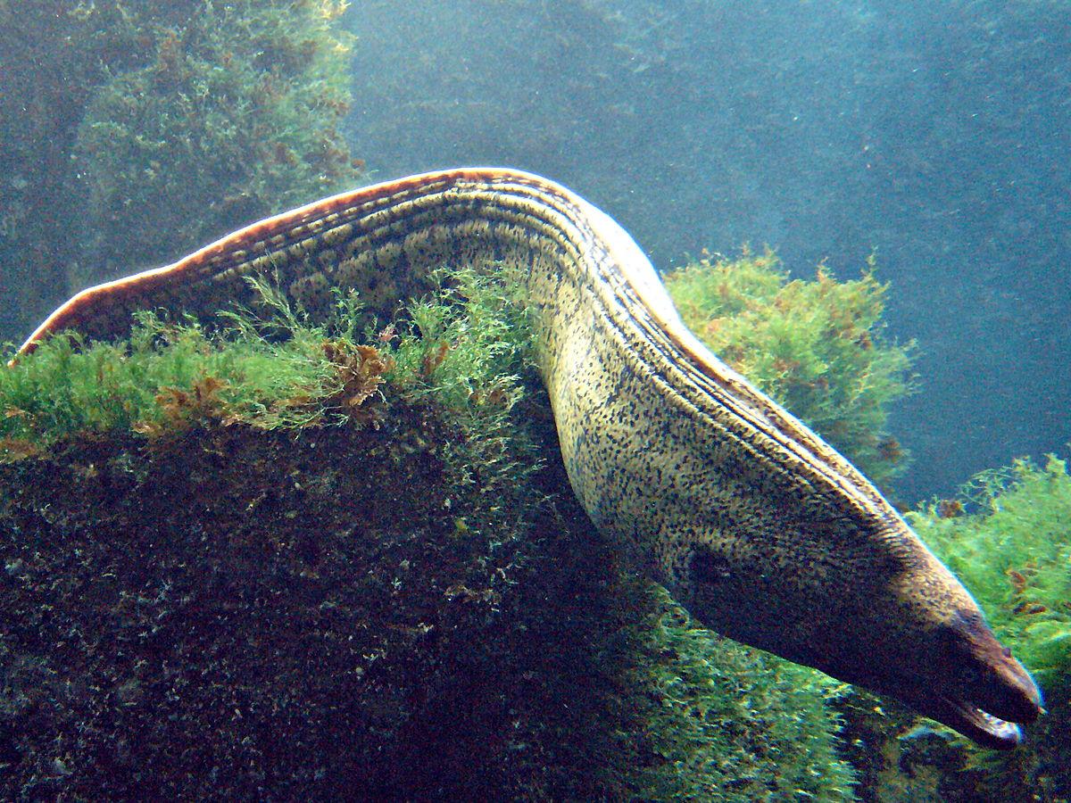 islas columbretes un viaje a la isla de las serpientes wildlife illustrations