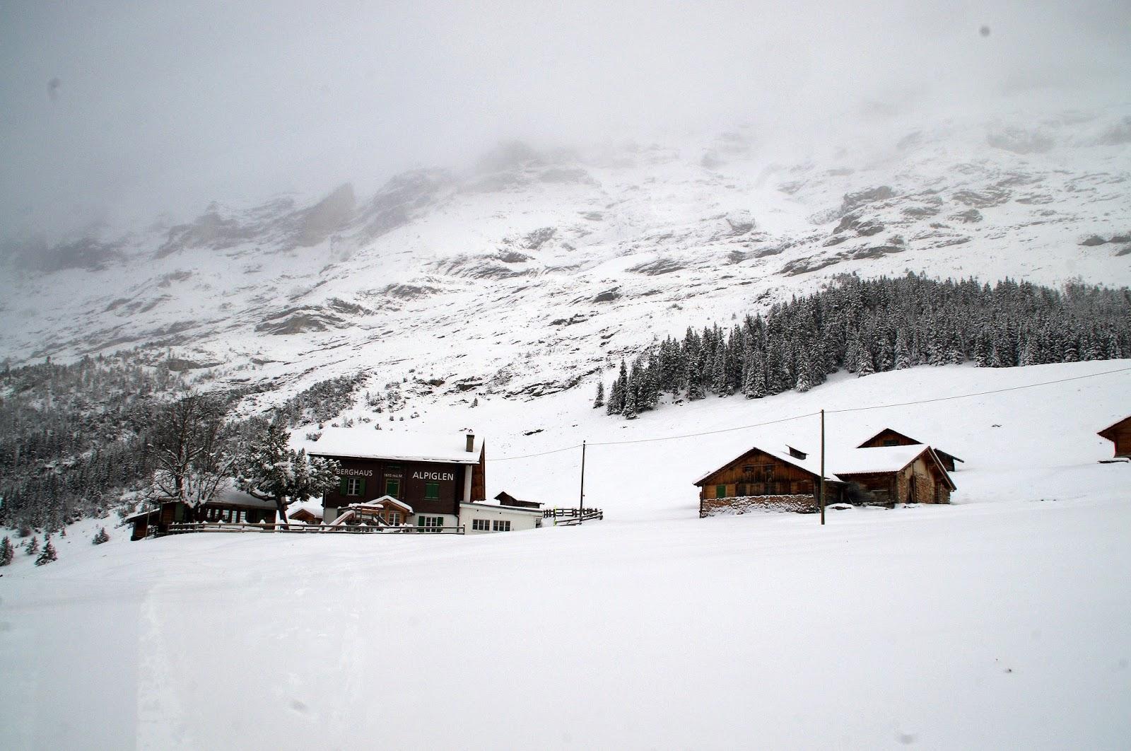 Jungfraujoch Train View