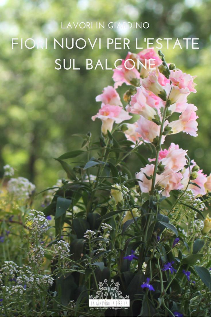 Fiori nuovi per l 39 estate sul balcone un giardino in diretta for Giardino balcone