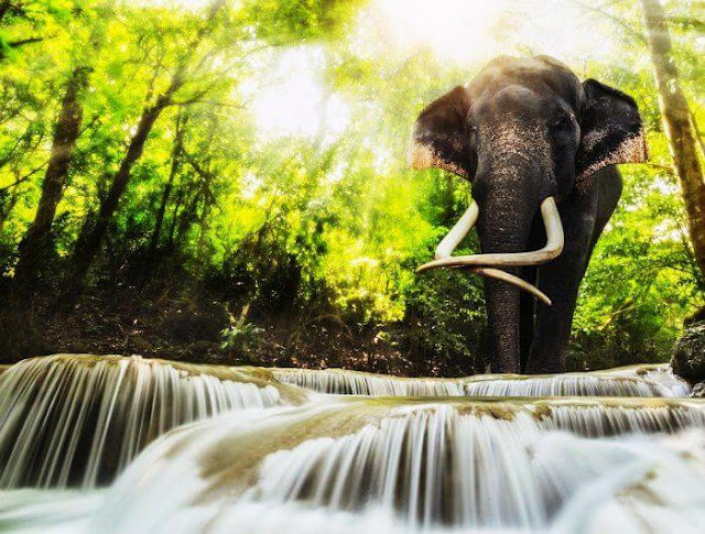 thailand honeymoon packages 7 days