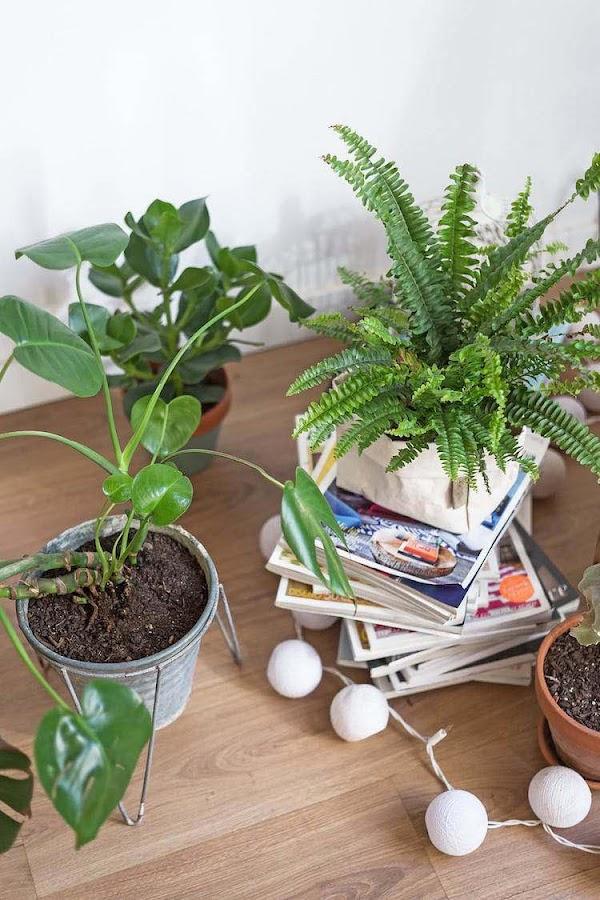 Propósitos hogar ecológico riego plantas