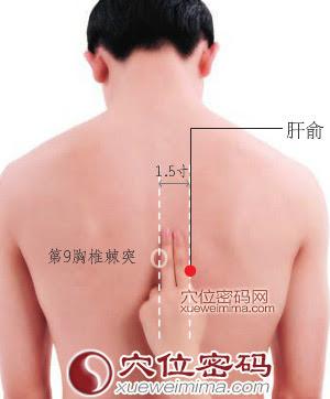 肝俞穴位 | 肝俞穴痛位置 - 穴道按摩經絡圖解 | Source:xueweitu.iiyun.com