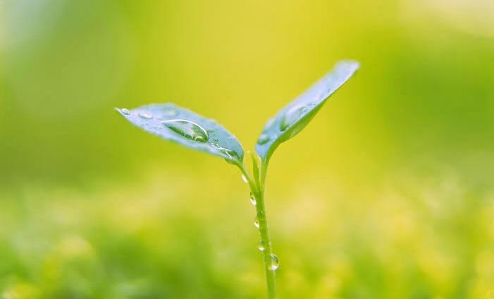 Tumbuhan Yang Mempunyai Ciri Khusus