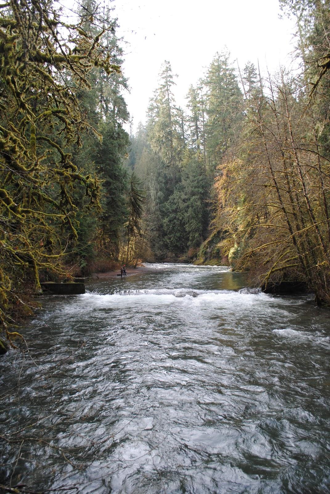Black Watch Sasquatch Eagle Fern Park Estacada Oregon