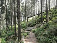 Baiersbronner Seensteig von der Zuflucht über den Buhlbachsee zum Lotharpfad