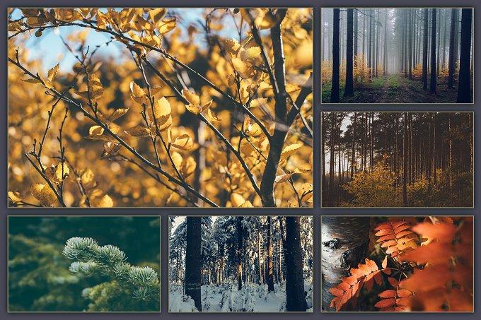 300 DPI | 30 stock ảnh rừng cây chất lượng cực cao